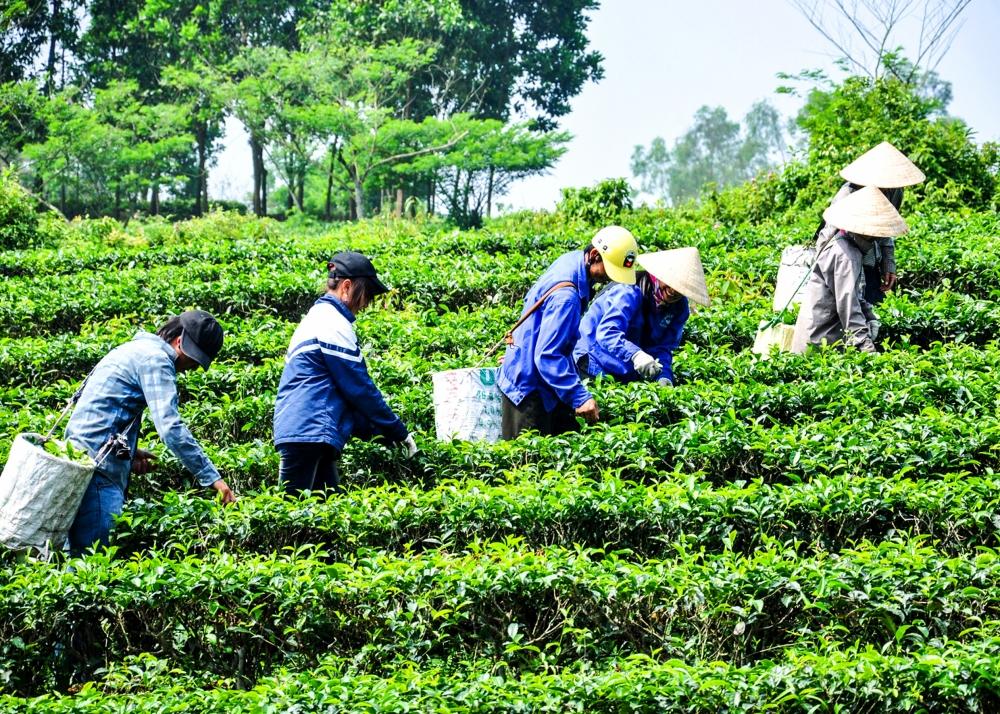 Hương Khê tập trung đẩy mạnh phát triển Kinh tế tập thể và Hợp tác xã