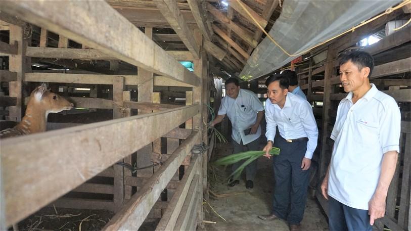 Hương Long: Nhiều giáo dân tiêu biểu trong phát triển kinh tế vườn, trang trại!