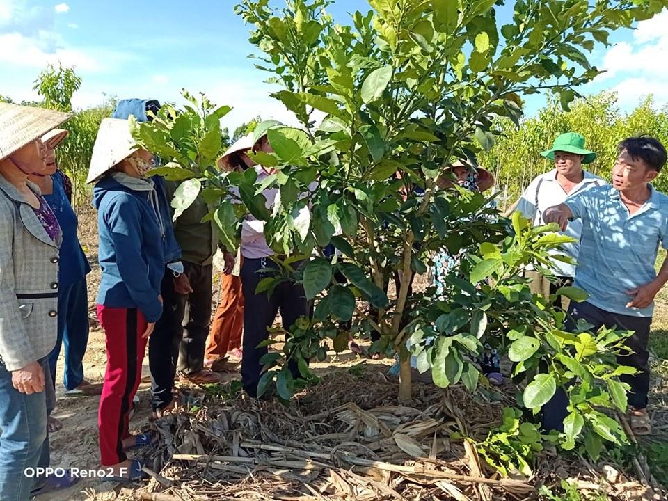 Hội Nông dân xã Phúc Trạch phối hợp tổ chức thành công 3 lớp tập huấn về kỹ thuật trồng và chăm sóc cây Bưởi Phúc Trạch