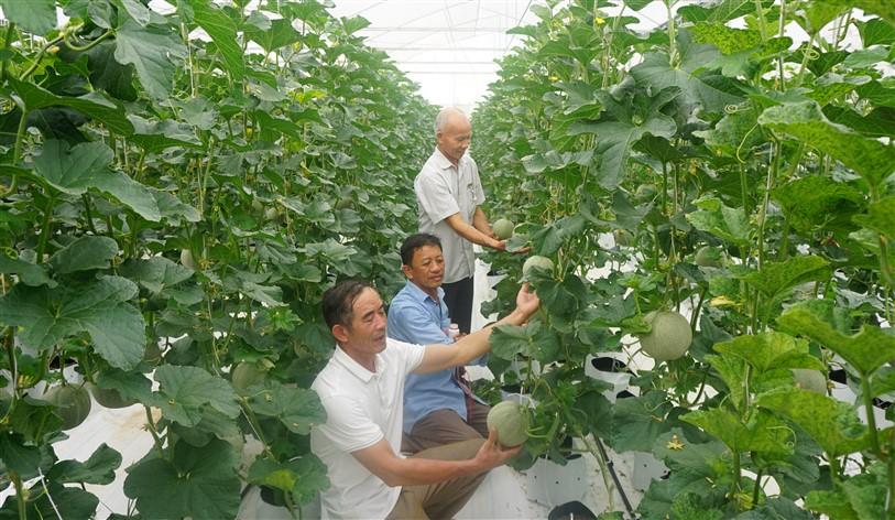 Anh Lê Mạnh Hùng, xã Hương Trà, xây dựng thành công Mô hình trồng Dưa lưới trong nhà màng