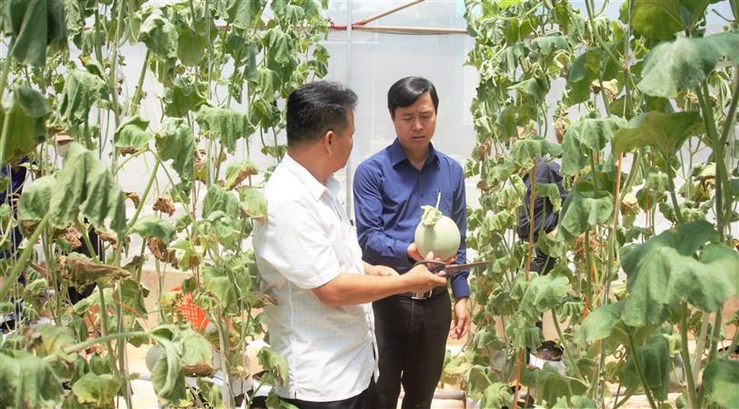 Vụ dưa lưới đầu tiên cho gia đình anh Sáng, ở xã Lộc Yên lãi ròng 150 triệu đồng.