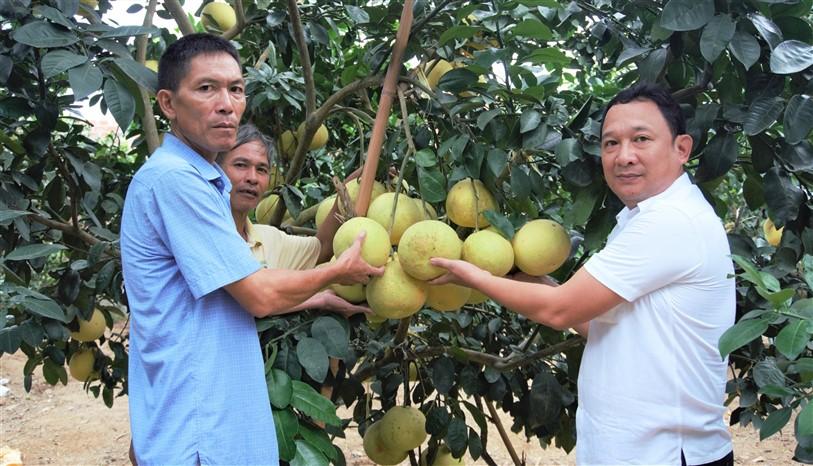 Hội Nông dân Hương Khê tập trung phát triển kinh tế từ cây chủ lực của địa phương.