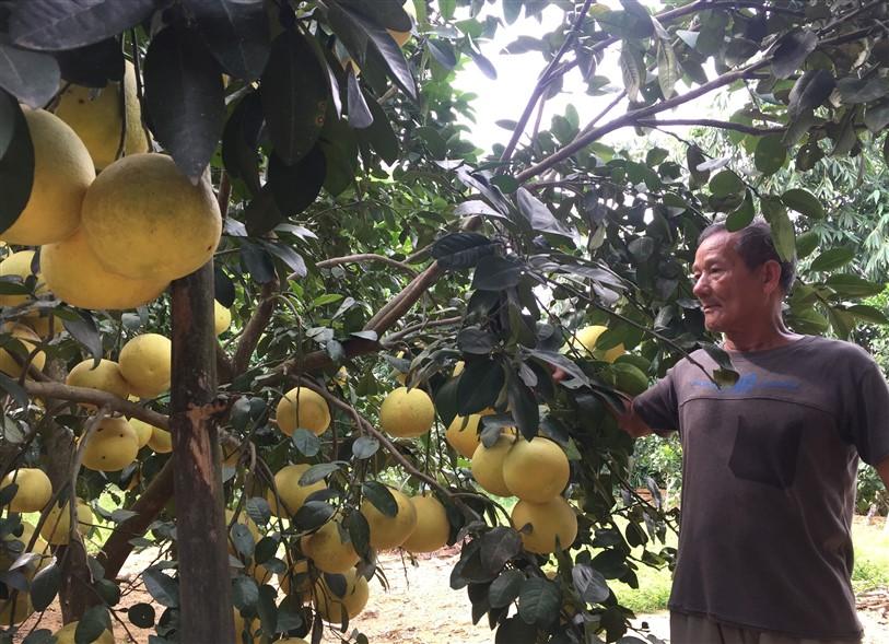 Đẩy mạnh thực hiện tái cơ cấu ngành nông nghiệp gắn với xây dựng Nông thôn mới ở huyện Hương Khê