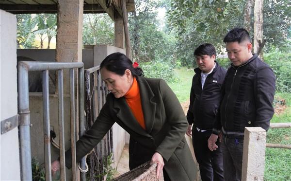 Hương Khê: Chủ động phòng chống rét cho trâu bò trong mùa Đông.