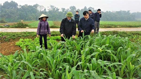 Giám đốc Sở NNPT NT kiểm tra sản xuất vụ Đông tại Hương Khê.