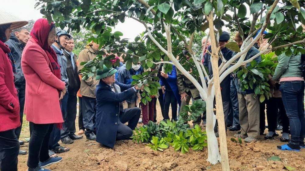 Hội Nông dân xã Lộc Yên phối hợp tổ chức chương trình tập huấn chăm sóc phòng trừ sâu bệnh cho cây Bưởi thời kỳ ra hoa chính vụ.