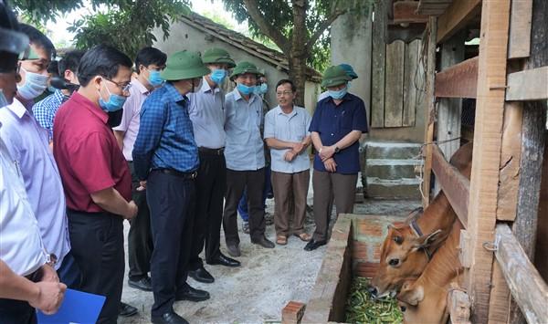 Bí thư Tỉnh ủy Hoàng Trung Dũng kiểm tra tình hình dịch bệnh trên đàn gia súc, gia cầm tại  Hương Khê.