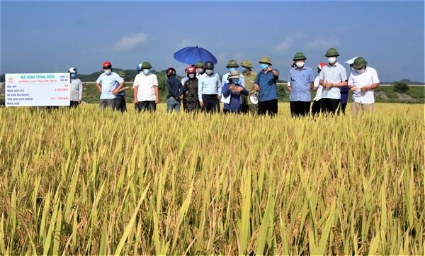 Hội thảo đầu bờ đánh giá  kết  quả các giống lúa mới   trong vụ Xuân năm 2021