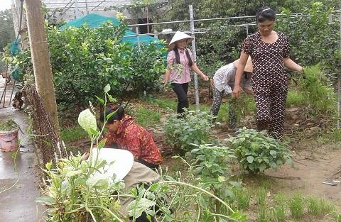 Hội phụ nữ xã Phú Phong, học theo Bác bằng những việc làm thiết thức