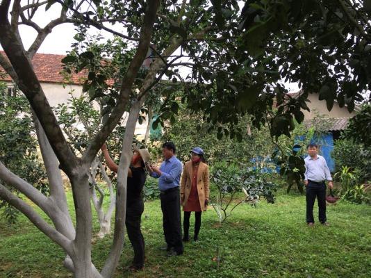 160 hội viên nông dân Lộc yên được tập huấn kỹ thuật thụ phấn và chăm sóc cây Bưởi Phúc Trạch