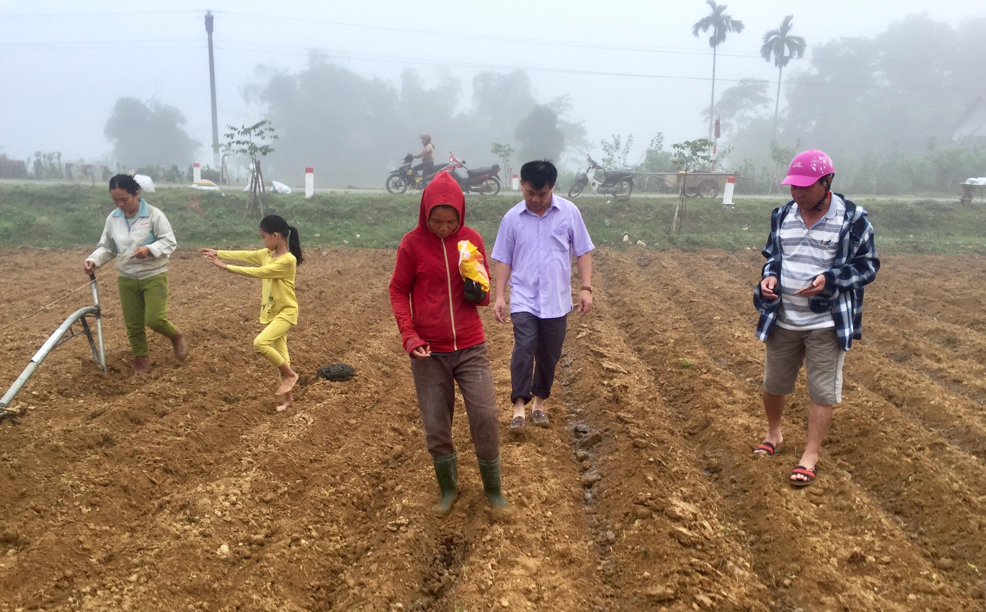 Hương Khê: hỗ trợ nông dân sản xuất trình diễn 2 ha Ngô vụ Đông