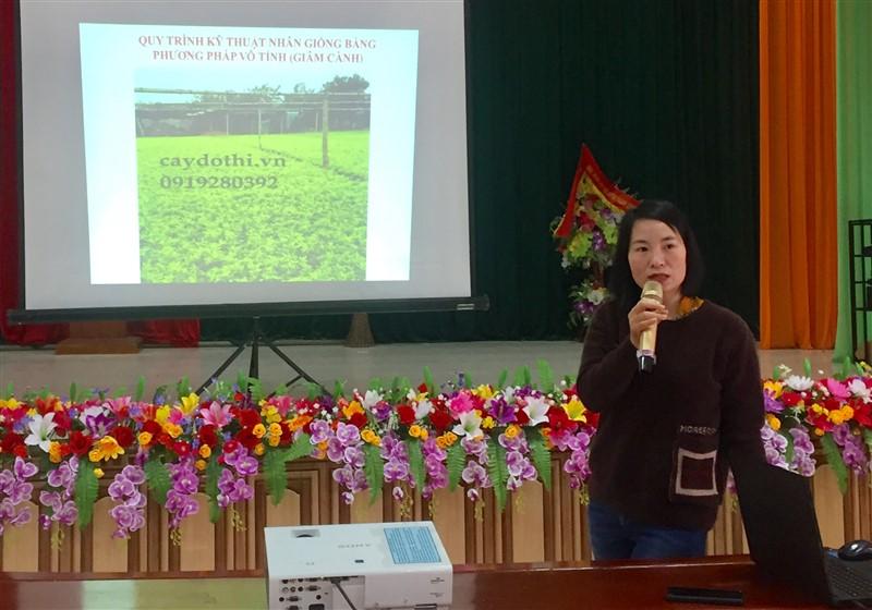 Hương Khê: Tập huấn kỹ thuật nhân giống các loại cây hàng rào xanh trong xây dựng NTM.