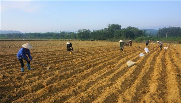 Nông dân Hương Khê tập trung sản xuất ngô Đông kịp thời vụ